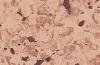 Напольное покрытие для судов PRIMO PLUS MARINE 6964
