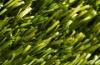 Искусственная трава 9505  Balta Garden Verde
